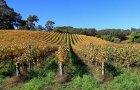 WijngoedFromberg.jpg